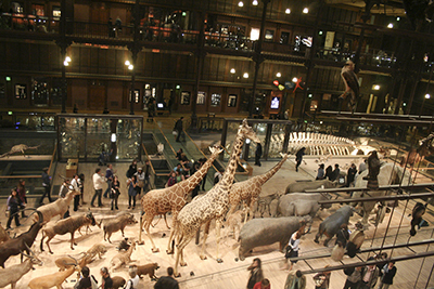 Museum-of-Natural-History-Paris-photo-by-Knowtex.jpg