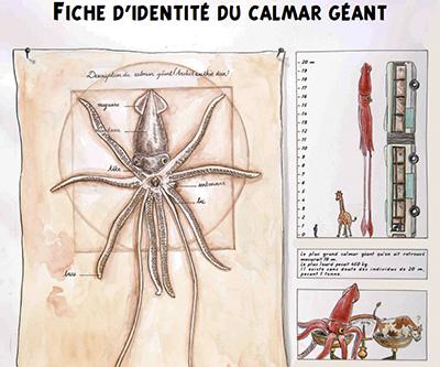 파리 자연사 거대 오징어 01.jpg