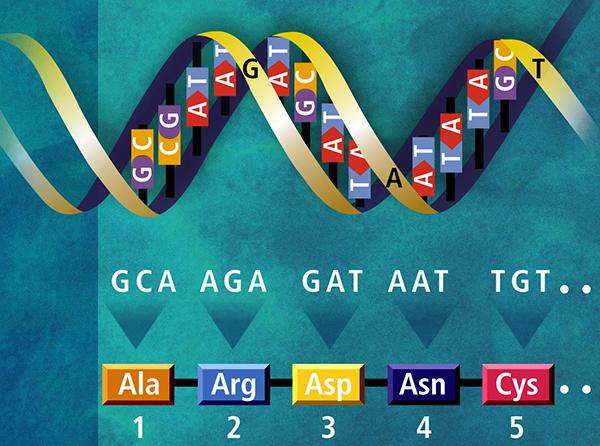 ee7218a21fb 자유게시판(유럽문화체험) - 호랑이 게놈 지도 세계 최초 완성